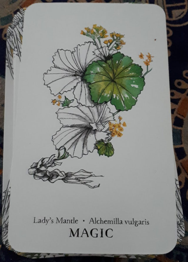 A picture of the plant, Lady's Mantle, with the word MAGIC at the bottom of the card.